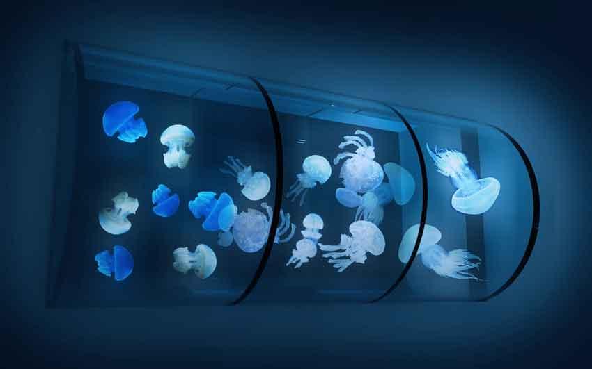 sumida-aquarium-4